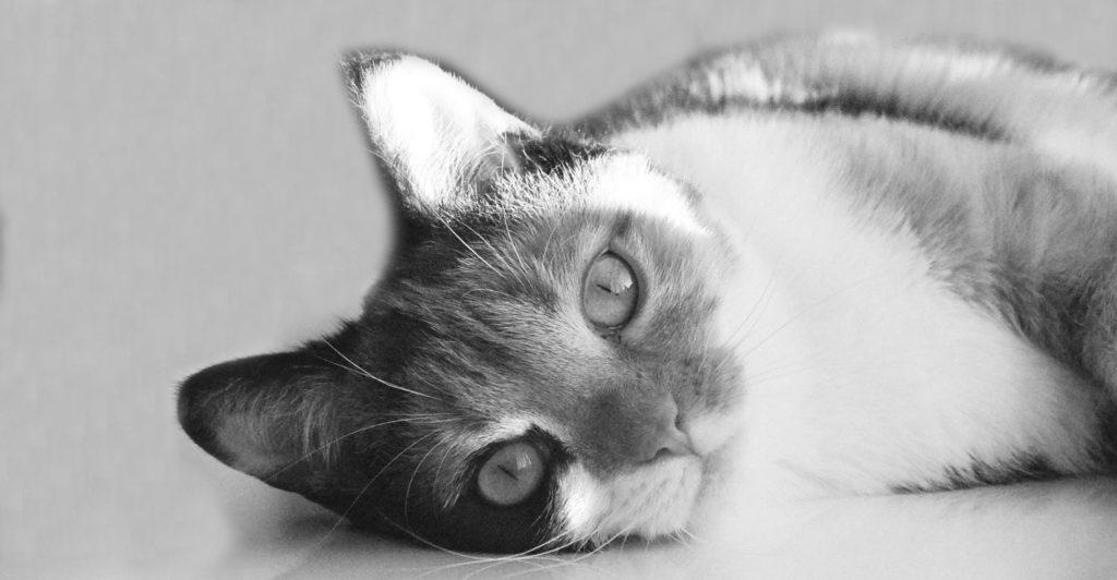 Webseite Preise - Bild Katze