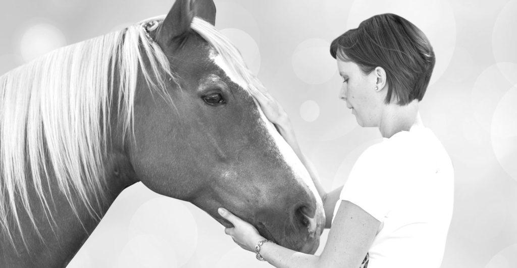 Tier-Energetik Anwendung mit Pferd