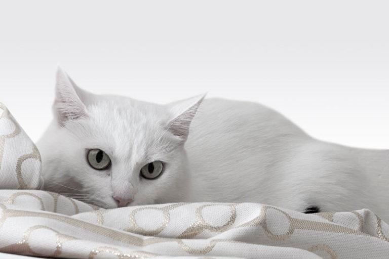 Bild einer weissen Katze